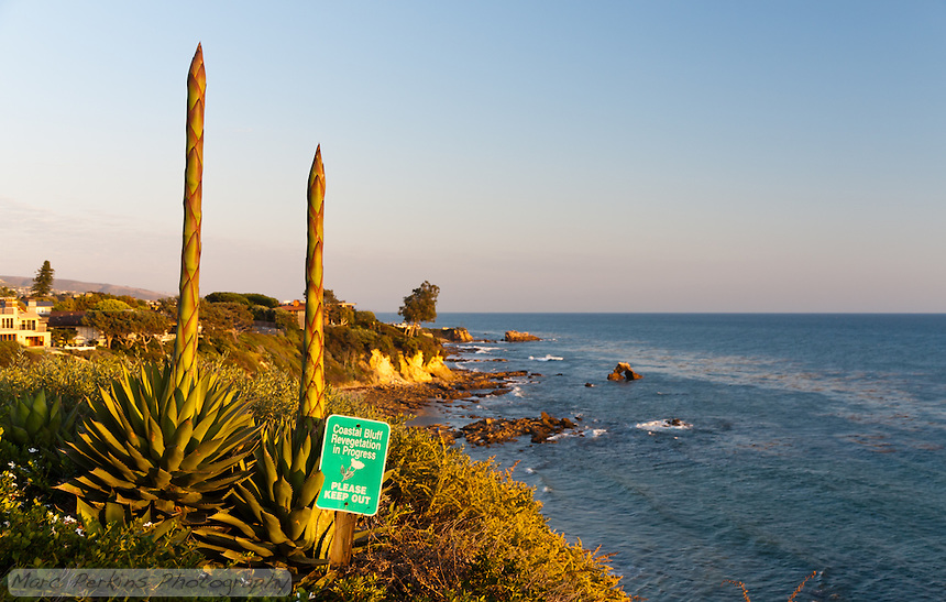 Two flowering agaves on the bluffs at Little Corona Beach, seen just before sunset.  I love the combination of classic California coastal bluffs in the background and the inflorescences in the foreground.  However, I don't like the sign in the foreground ...