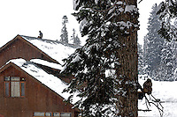 Sitting on the roof of the Hilltop hotel in Gulmarg a local man mirrors the actions of a monkey in a  near by tree.