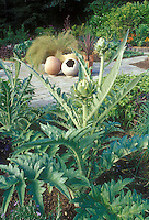 Artichoke Cynara cardunculatus Scolymus vegetable plant growing in in the ground, edible crop, perennial, with other plants and flowers, stone walkway, ornamental pots, in potager for edible landscaping