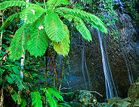 Coca Falls  El Yungue Rainfarest, Puerto Rico  Caribbean National Forest  Only Tropical forest in the United States  Natioanal Forest System