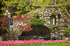 April 21, 2017; Tulips at the Grotto, spring 2017. (Photo by Barbara Johnston/University of Notre Dame)