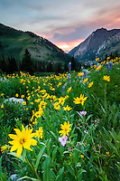 Wildflowers in Little Cottonwood Canyon in Utah's Wasatch Mountains sway in the breeze at sunset.