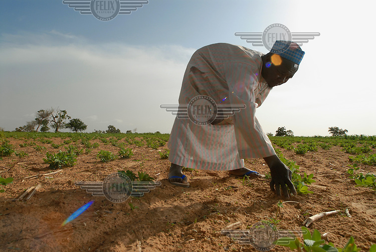 A local farmer tends to his plants at an IFAD-supported nursery. The International Fund for Agricultural Development (IFAD), a specialised UN agency established to finance agricultural projects in developing countries, runs several programmes that work to combine environmental protection with agricultural productivity in the dry sub-Saharan Sahel region.