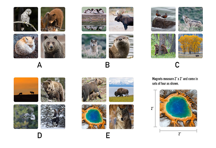 $12.00<br /> <br /> Order a set of Yellowstone magnets featuring wildlife and scenery from the world's first national park.<br /> <br /> These magnets measure 2&quot; x 2&quot; and come in sets of four, as shown.  Choose from five different sets.  Click the &quot;Add to Cart&quot; button and select your set.