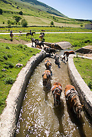 Maiella National Park, Abruzzo, Italy, June 2008. Horses walk through the green valleys of the Majella. Photo by Frits Meyst/Adventure4ever.com