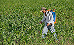 A farmer sprays pesticide on a field of corn in rural Guatemala.