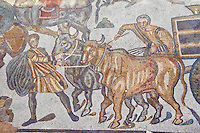 Bulls pulling a wagon from the Ambulatory of The Great Hunt, room no 28,  at the Villa Romana del Casale which containis the richest, largest and most complex collection of Roman mosaics in the world. Constructed in the first quarter of the 4th century AD. Sicily, Italy. A UNESCO World Heritage Site.