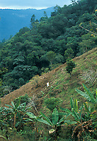 Mexico, Puebla State, traditional agriculture, Indian man planting on slope, increasing the risk of erosion.