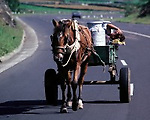 A horse pulls a milk cart on its way to a village dairy cooperative while the driver takes a nap on Terceira, Azores. Far out in the Atlantic Ocean, some 850 miles off the western coast of Lisbon, Portugal lies the 425-mile long archipelago of the Azores. (Jim Bryant Photo).....