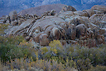 California, East Central,  Alabama Hills Recreation Area, Lone Pine. Rock formations in the Alabama Hills with autumn color just after sunset in November.