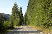 FOREST_LOCATION_90124