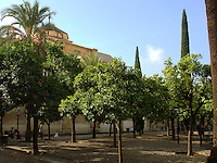 View from the Patio de los Naranjos (Orange Pation) beside Great Mosque - the Mezquita in Cordoba - Spain.