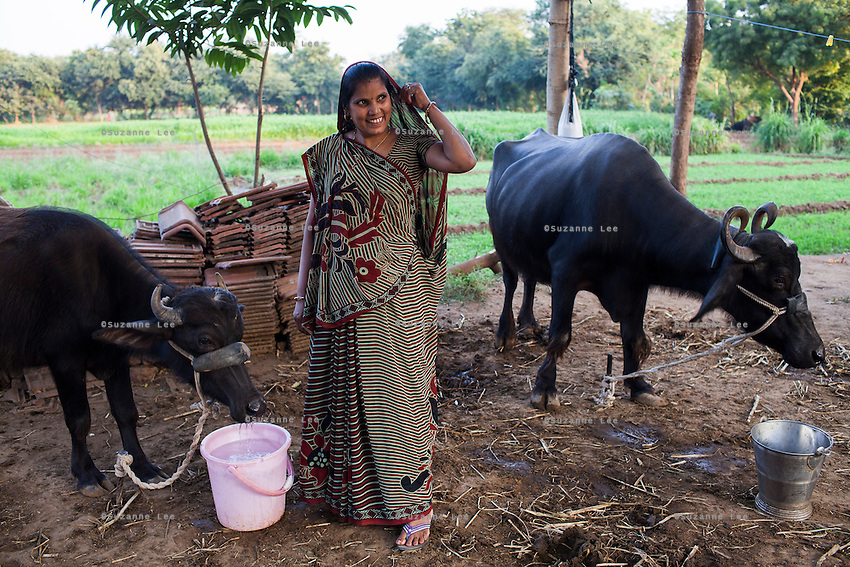 Sharda Solanki, 36, tends to her buffaloes, in front of the land she now owns, in the compound of her house, all bought with the money she made from doing 2 surrogacies, in Anand, Gujarat, India on 9th December 2012. While her husband Kantibhai works as a security guard earning 5000 rupees per month, Sharda had made hundreds of thousands with 2 surrogacies that she did with Akanksha Clinic, which she used to buy land, buffaloes, build washrooms in her house and extend the house. She had also saved a substantial amount to fund her 3 children's educations and make sure that her 2 daughters will find husbands to match their current status. Photo by Suzanne Lee / Marie-Claire France