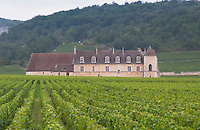 Vineyard. Chateau du Clos de Vougeot. Cote de Nuits, d'Or, Burgundy, France
