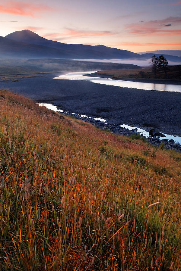 Grassy bank of the Lamar River running through Lamar Valley on a fall morning, Yellowstone National Park, Wyoming, USA