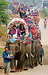 Asian elephants (elephas maximus)at the Elephant Asia festival in Pak Lai, Laos are heading to the elephant bassi ceremony where the spirits are encouraged to stay with the elephant to keep them healthy.