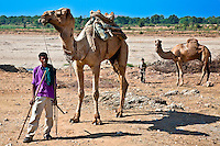 Camel shepherds in the Rajasthani countryside. (Photo by Matt Considine - Images of Asia Collection)