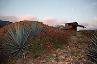 &quot;Agave Sunset&quot; - This sunset, moon and agave plant were photographed at Parador San Sebastian, Mexico.