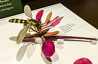 fly pollinating flower Glass Flowers Exhibit Harvard Museum of Natural History;