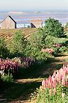 Rural scene, Prince Edward Island, Canada