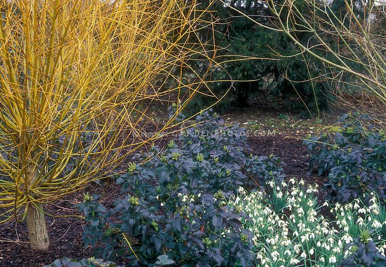 Garden Photos Images – Plants for Winter Garden