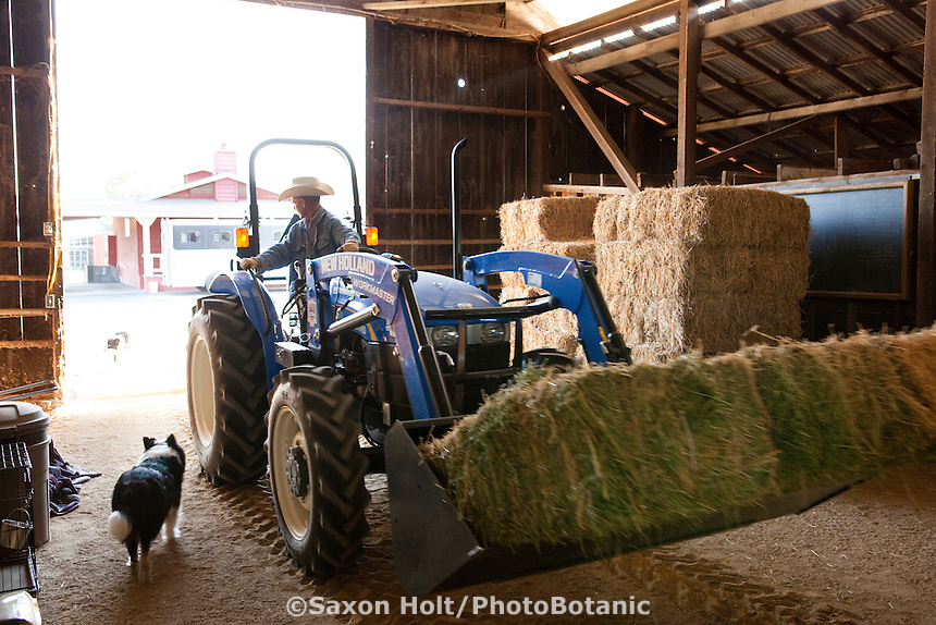 Rancher, Murray Thompson, loading hay into barn on his tractor