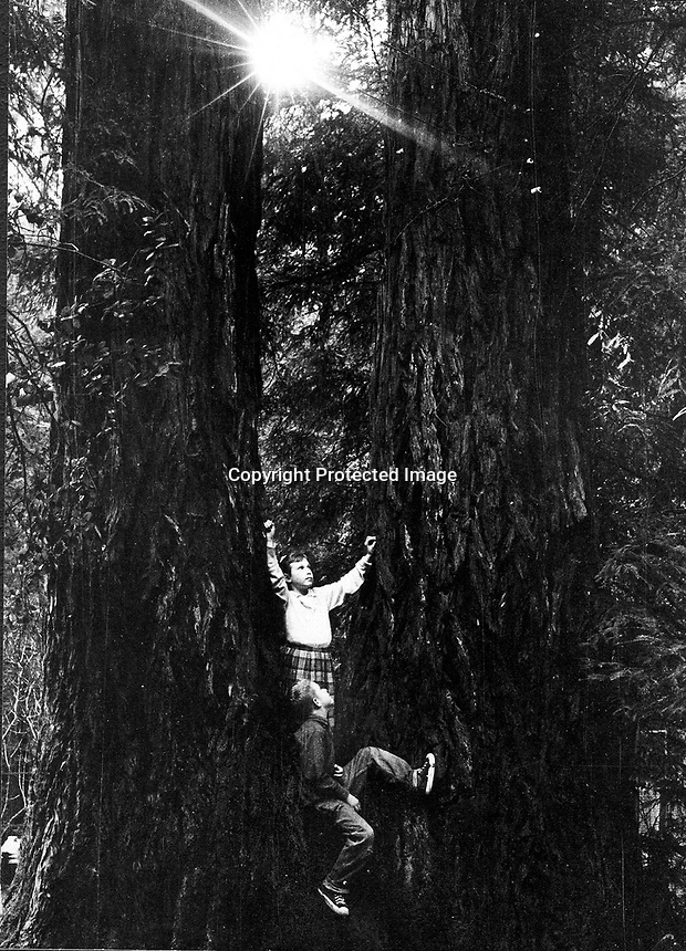 Kids climbing among a couple of Redwood trees in Canyon, California. (photo/Ron Riesterer)