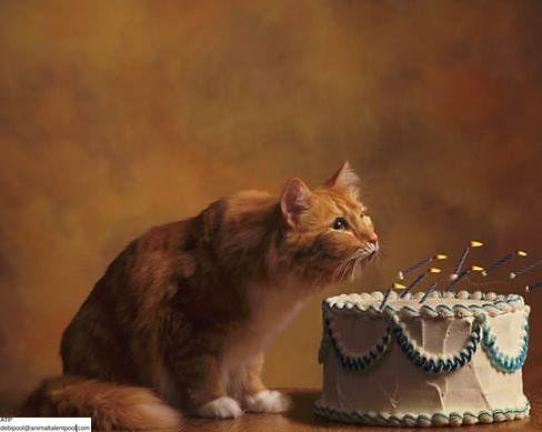 Joe-Lampi-Photography-Birthday-card.jpg