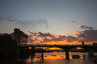 The Ann W. Richards Congress Avenue Bridge spans Town Lake in downtown Austin and is home to the largest urban bat colony in North America. The colony is estimated at 1.5 million Mexican free-tail bats. Each night from mid-March to November, the bats emerge from under the bridge at dusk to blanket the sky as they head out to forage for food. This event has become one of the most spectacular and unusual tourist attractions in Texas. The most spectacular bat flights are during hot, dry August nights, when multiple columns of bats emerge.