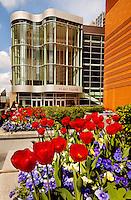 Charlotte in bloom in spring