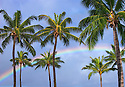 Rainbow and coconut palm trees over Pearl Harbor; Honolulu, Oahu, Hawaii.