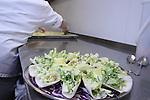MPI WSC & OC | Cascadia 2012 in the kitchen at Hotel Murano.