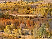 Eastern Sierra Autumn