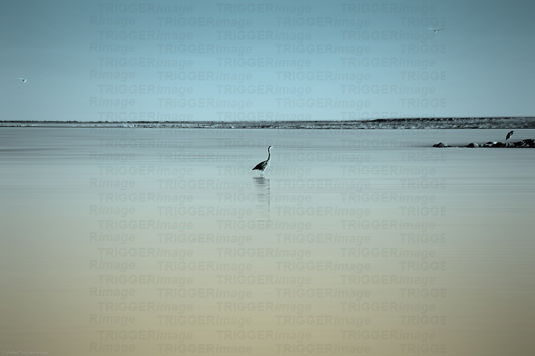 A heron stands in smooth water at the Salton Sea in California.