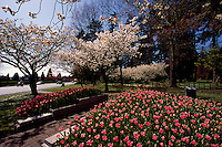 Central Park, Burnaby, BC, British Columbia, Canada - Spring Flowers and Blossoms