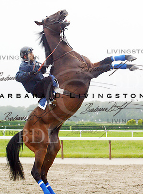 Denon rearing, at Belmont Park June 2003.   © 2003 Barbara D. Livingston. All rights reserved. easygoer78@aol.com
