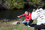 A tourist couple takes pictures of an American Alligator in Shark Valley area, Everglades National Park, Florida, USA