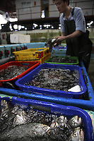 Kwun Tong Wholesale Fish Market in the Kwun Tong area of Hong Kong on 10 Tung Yuen Street.  Photos of tanks and unloading oxygenated air carrier and unloading truck of packed fish are shot at Kenneth Aquamarine Products Inc.  +852 2340 5622.