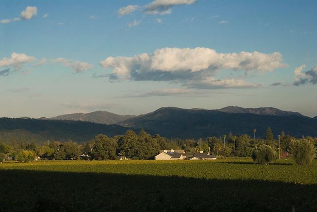Vineyards and Spottswoode Winery