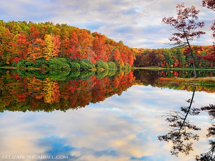 Autumn Kaleidoscope I