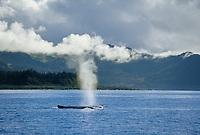Humpback whale blow spout, Prince William Sound, Alaska