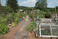Homemade Cold Frames from old doors in vegetable garden