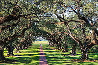This is a view from the balcony on the second floor of the mansion. This path among the great 300 year old oak trees leads away from the house and toward the missippi river trhough the tunnel of trees.  No one knows how these oaks came to be but the house is place just right to utilized them.