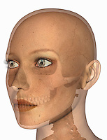 Biomedical illustration of the human skull in a female head