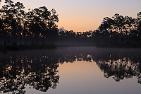 The sky brightens above morning fog around the pond at Long Pine Key campground in Everglades National Park, Florida.