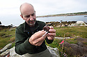 THE ISLES OF SCILLY SEABIRD RECOVERY PROJECT. PETER EXLEY, RSPB, EXAMINES SOME RAT BAIT FOR SIGNS OF BITE MARKS.  17/06/2015. PHOTOGRAPHER CLARE KENDALL.