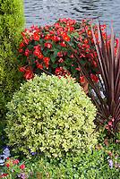 Buxus sempervirens 'Elegantissima' variegated boxwood, Phormium, Begonia, near water