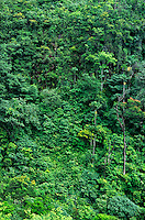 793050292 tropical rainforest jungle along the carro river in canaima national park venezuela