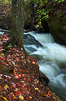 Freshly fallen leaves cover the banks of a flower creek. Marquette County, Michigan