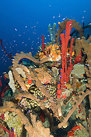 Underwater sponge and coral scenic at Pavillions.St. Croix.US Virgin Islands